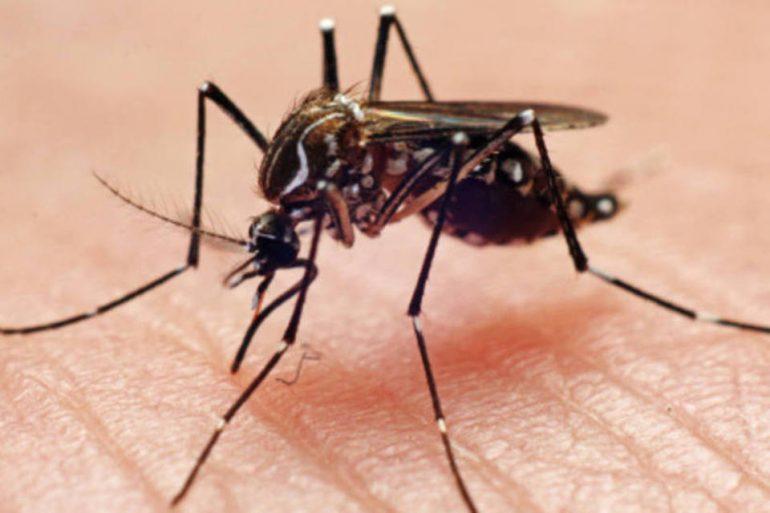 size_960_16_9_mosquito-dengue36