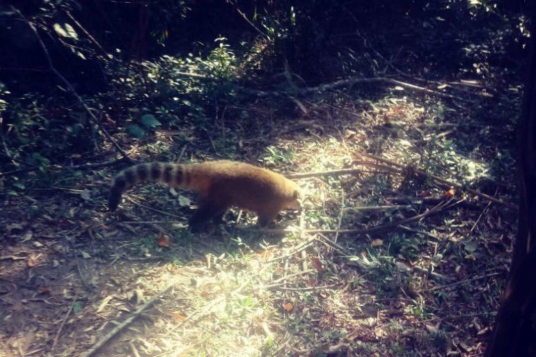 Paraná vai ampliar atendimento à fauna vítima de tráfico e maus-tratos (Foto IAT)