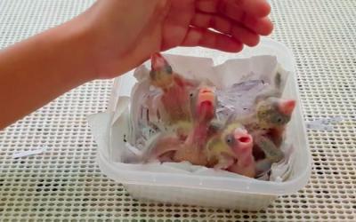 Foto-filhotes-de-caturritas-resgatados