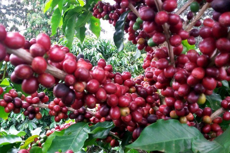 cafe3